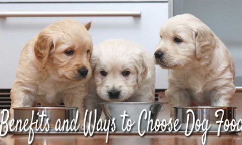 Benefits and Ways to Choose Dog Food